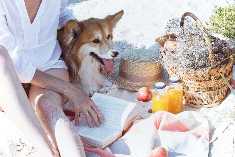 apples and more fruits to feed your dog
