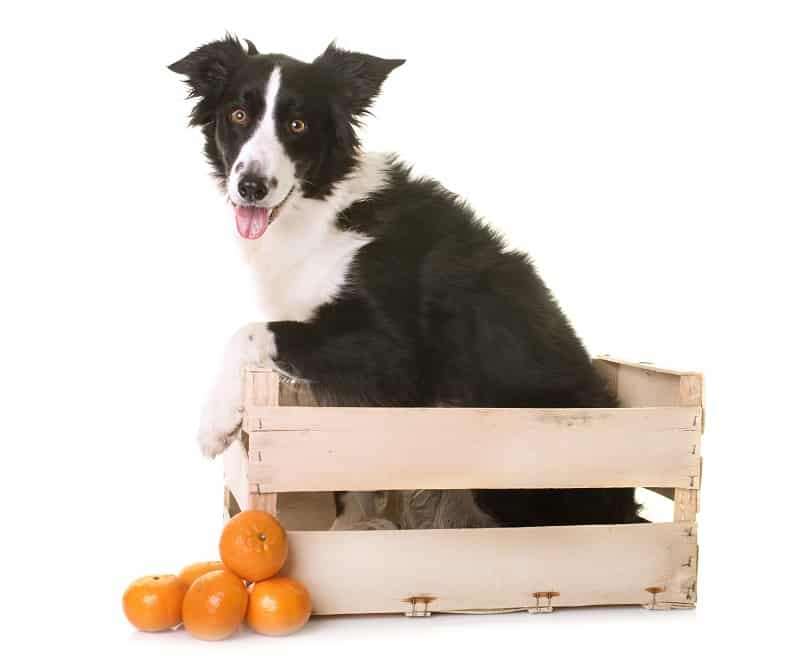 healthy fruits for your dog including oranges
