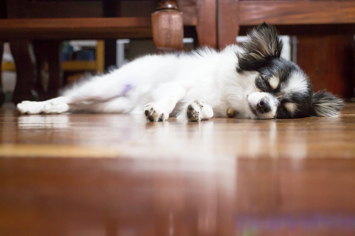 increased sleeping is a sign of stress in dogs