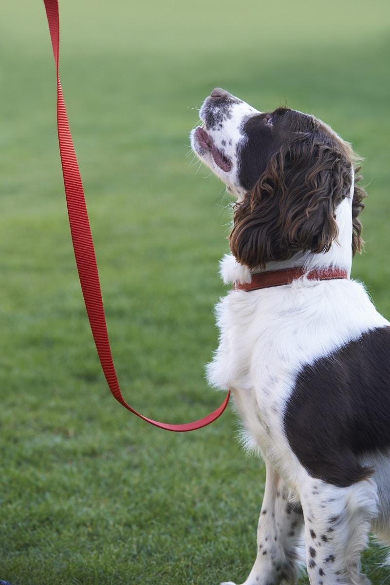 leash training tips