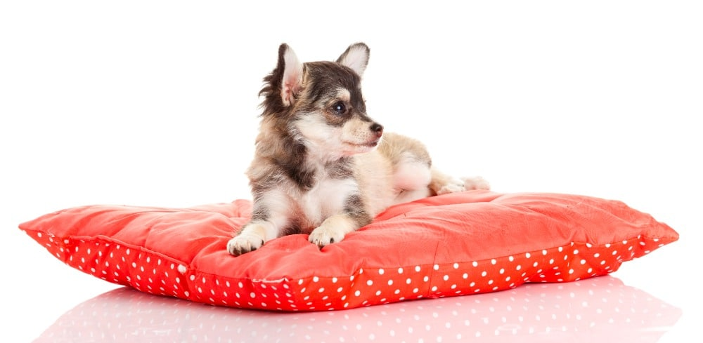 creating a safe place for your pet
