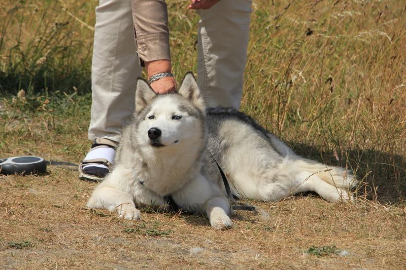 petting unfamiliar dogs