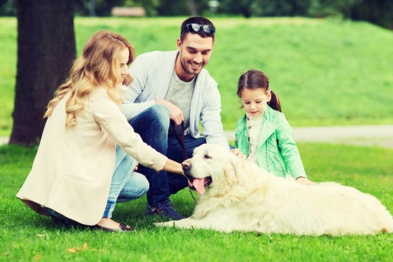 should I let strangers pet my dog