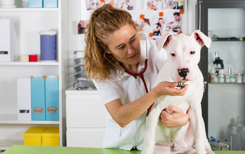vet care for your dog