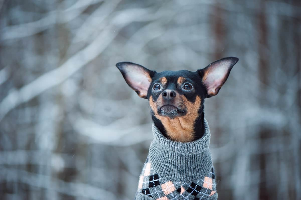 winter dog walking tips and essentials